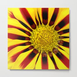 Red and Yellow Daisy Metal Print
