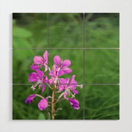 Fireweed Wildflower Wood Wall Art
