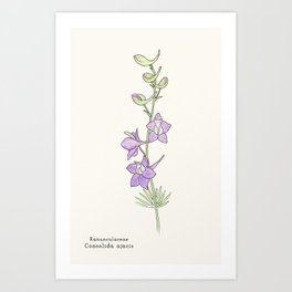 Ligne claire 1: Doubtful Knight's Spur (Consolida ajacis) Art Print