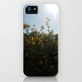 Maximilian Sunflower 2 iPhone Case