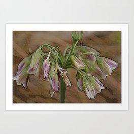 Allium Flower Art Print