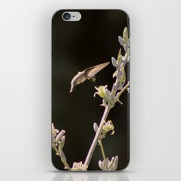 Hummingbird Drinking from Hesperaloe Parviflora Flower iPhone Skin