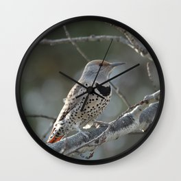 Red-shafted Northern Flicker Wall Clock