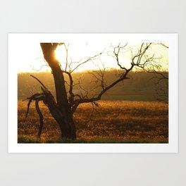 Backlit Tree Art Print