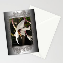 Peacock Gladiolus Stationery Cards