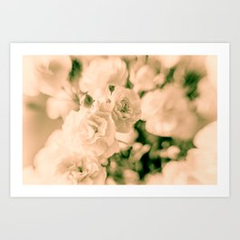 Romance and Ruffles beautiful flowers Art Print