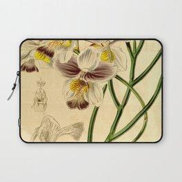 Papilionanthe teres (as syn. Vanda teres) Laptop Sleeve