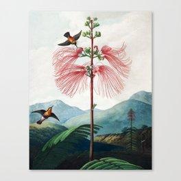 Large Flowering Sensitive Plant - The Temple of Flora Canvas Print