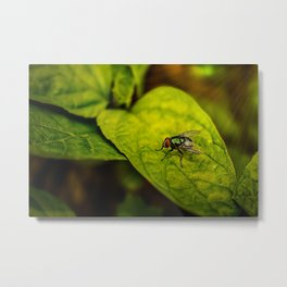 Fly in the green Metal Print
