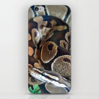 monty python iPhone & iPod Skins featuring Python by GardenGnomePhotography