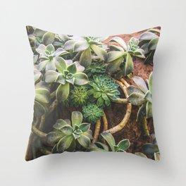 Botanical Gardens - Succulent #882 Throw Pillow