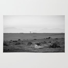 Lone lioness rests on African savanna Rug