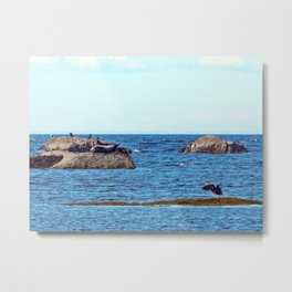 Time to Fly, Seal you Later Metal Print