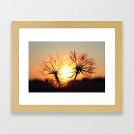 sunset in august Framed Art Print