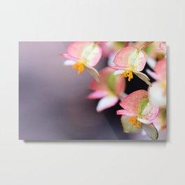 Raindrops on Tiny Begonia Blooms Metal Print