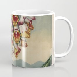 Henderson, Peter C. (d.1829) - The Temple of Flora 1807 - Nodding Renealmia Coffee Mug