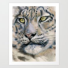Snow Leopard A091 Art Print