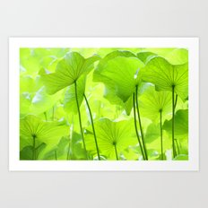 Lotus Leaves Art Print