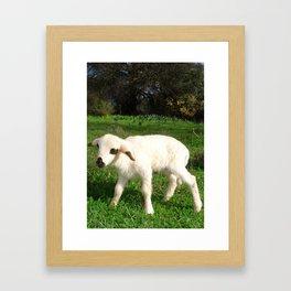A Newborn Lamb Finding Its Feet Framed Art Print
