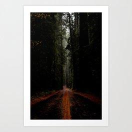 Avenue of the Giants Art Print