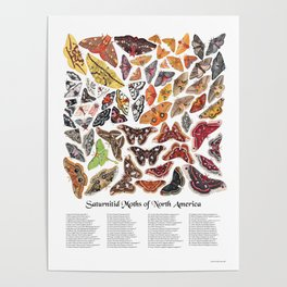 Saturniid Moths of North America Poster
