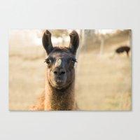 llama Canvas Prints featuring LLAMA by Julie Zhang