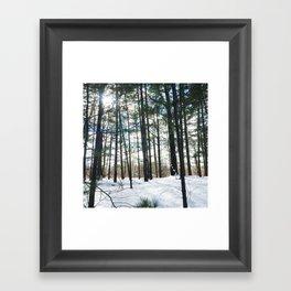 Winter Woods1 Framed Art Print