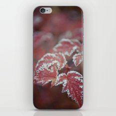 White Laced iPhone & iPod Skin