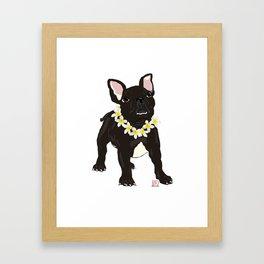 CubaTheFrenchie Framed Art Print