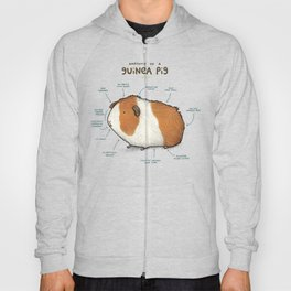 Anatomy of a Guinea Pig Hoody