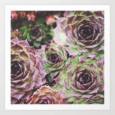 Hens and Chicks Art Print