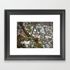 Song Thrush Framed Art Print