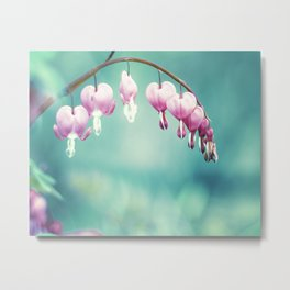 Bleeding Heart Flower Photography, Teal Pink Floral Photo, Turquoise Aqua Hearts Print Metal Print