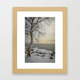 Curves of the Silver Birch by Teresa Thompson Framed Art Print