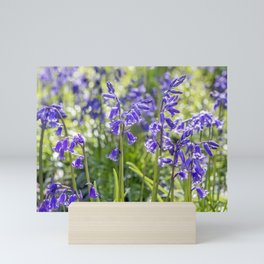 Spring Bluebells Mini Art Print
