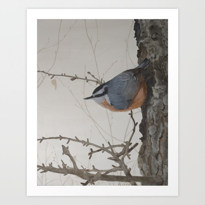 Red-breasted Nuthatch at Yellowknife River Art Print by ShawnaLampiLegaree - X-Small (s6-11900146p4a1v45) photo