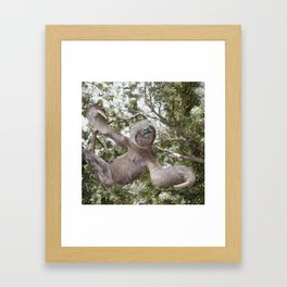 Sloth, A Real Tree Hugger Framed Art Print
