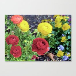 Ranunculus and Violas Canvas Print