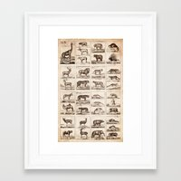 animals Framed Art Prints featuring Animals by Le petit Archiviste
