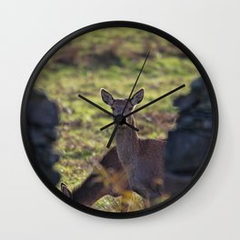 Red deer stare Wall Clock