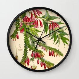 Illustration Of Himalayan Plants Vintage Scientific Botanical Illustration Wall Clock