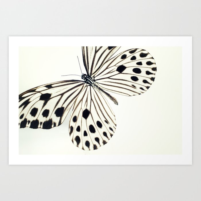 Butterfly (Idea stolli) Art Print