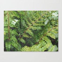Fern Fronds Canvas Print
