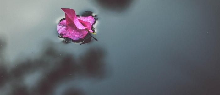 flower photography by J A N U P R A S A D Coffee Mug