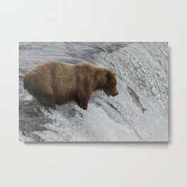 Brown Bear Catching Salmon in Waterfall Metal Print