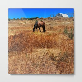 Horse in the steppe Metal Print