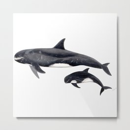 Pygmy killer whale Metal Print