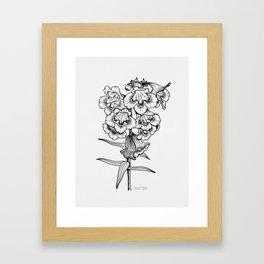Penstemon Framed Art Print