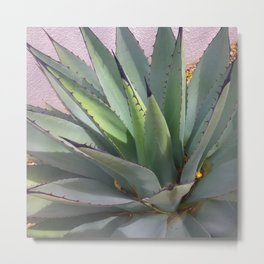 New Mexican Agave Cacti Metal Print