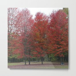 Fall Trees - Red Metal Print